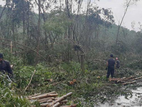 Người trồng rừng trắng tay sau bão