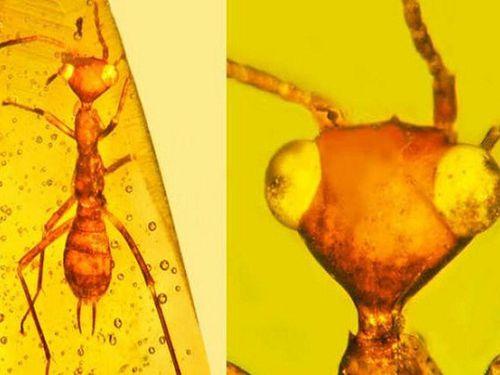 Hóa thạch hổ phách độc lạ mở ra cơ sở về sự sống thời tiền sử