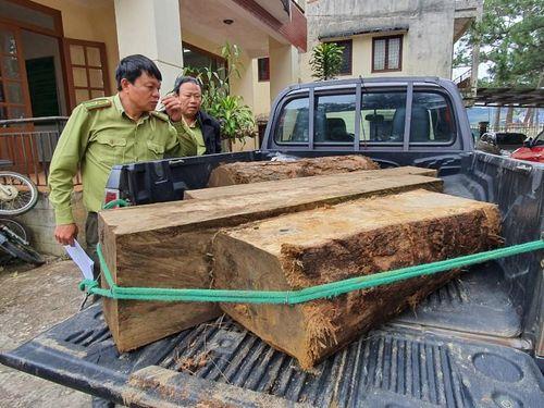 Bắt gỗ lậu ở Cổng Trời