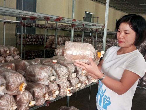 Thanh Hóa: Ứng dụng công nghệ mới sản xuất nấm linh chi
