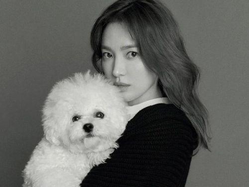 Dù ly hôn hay tái hôn, Song Hye Kyo vẫn hot nhất Hàn Quốc: 'Chị sợ quá cơ!'