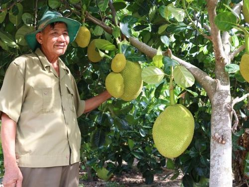 Biến vùng khô cằn thành vùng cây ăn quả hái ra tiền