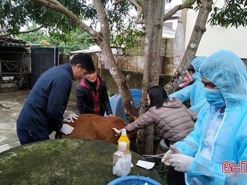 Ngành chuyên môn thông tin về dịch bệnh lần đầu tiên xuất hiện trên trâu, bò ở Hà Tĩnh