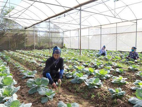 Ngành Nông nghiệp Thủ đô: Chủ động trước rét đậm, rét hại