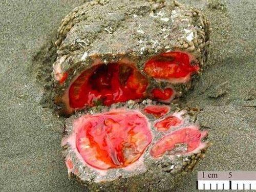 Bí ẩn 'hòn đá' bên bờ biển 'chảy máu' khi bị cắt