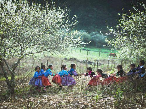 Mộc Châu mùa hoa mận nở rộ