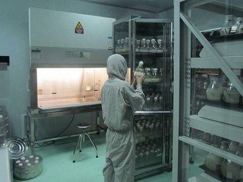 Nghiên cứu sản xuất sản phẩm thực phẩm hỗ trợ cải thiện trí nhớ