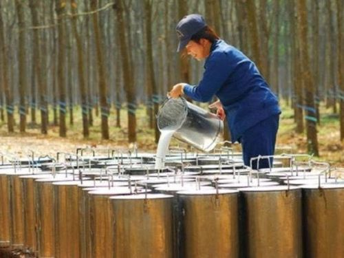 Năm 2020, Cao su Phước Hòa (PHR) báo lãi tăng gấp đôi nhờ tiền bồi thường đất
