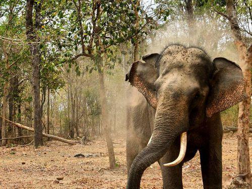 Nơi bảo tồn rừng khộp duy nhất ở Việt Nam