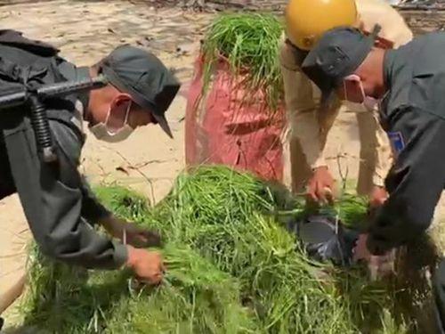 Thu giữ 2.000 bao thuốc lá lậu ngụy trang trong gánh cỏ