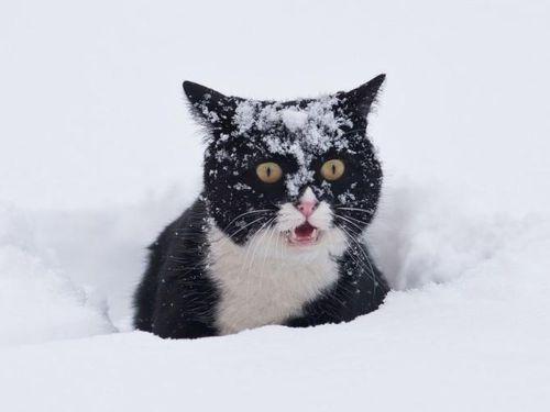 Hạn chế việc mèo tha xác động vật về nhà bằng cách cực kỳ đơn giản
