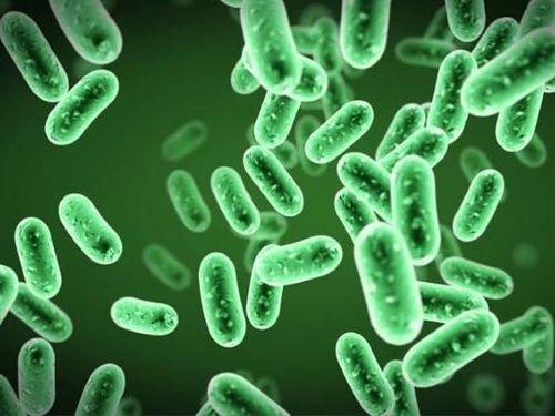 Tiềm năng của probiotics trong điều trị COVID-19