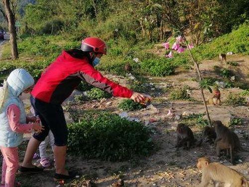 Hàng loạt tai nạn thương tâm, người dân Đà Nẵng vẫn vặc lại BQL Bán đảo Sơn Trà khi bị nhắc nhở 'chiều hư' đàn khỉ