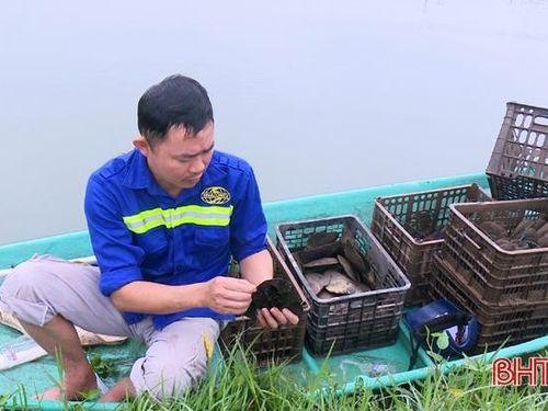 Mô hình nuôi trai lấy ngọc ở TP Hà Tĩnh sinh trưởng tốt, phủ ngọc nhanh
