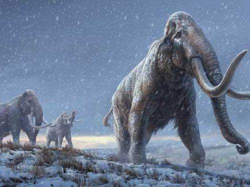 Giải mã ADN từ voi ma mút sống cách đây gần 1,2 triệu năm
