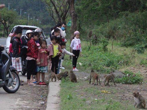 Tình nguyện viên tuyên truyền bảo vệ khỉ Sơn Trà