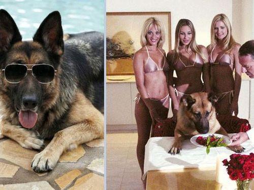 Chú chó sống trong biệt thự triệu USD, sở hữu khối tài sản cực 'khủng'