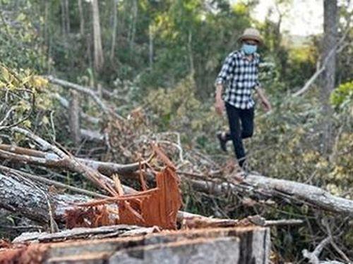 Vì sao rừng Đắk Lắk liên tục bị tàn phá?