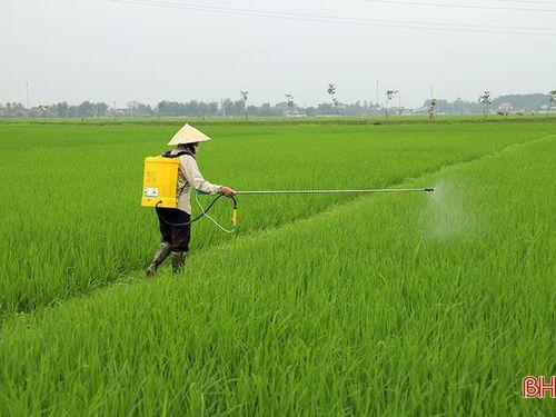 Nông dân Đức Thọ ra đồng phòng trừ bệnh đạo ôn trên lúa