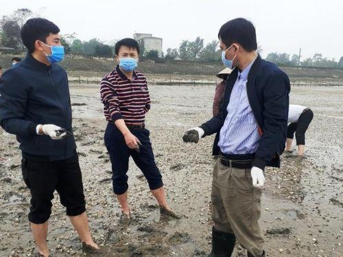 Ngao nuôi ở bãi triều Thanh Hóa bị chết hàng loạt