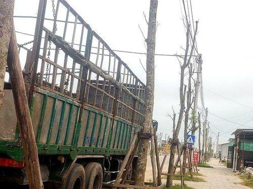 Thêm dự án nhiều cây xanh tróc vỏ, trụi lá phản cảm ở Huế