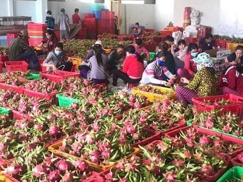 Khó kiểm soát chất lượng nông sản