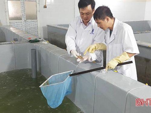Quản lý chất lượng con giống - đảm bảo vụ tôm xuân hè tại Hà Tĩnh thắng lợi