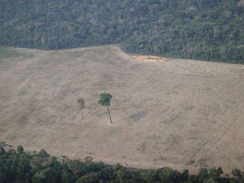 Brazil kêu gọi hỗ trợ 1 tỷ USD để chống nạn phá rừng Amazon