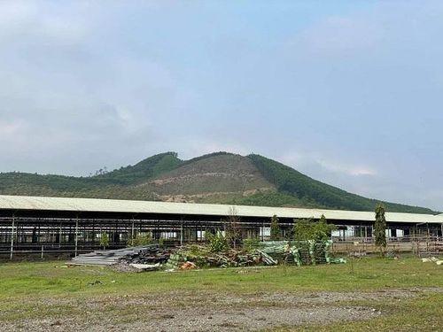 Đại dự án nuôi bò tại Hà Tĩnh sau nhiều năm 'đắp chiếu' sẽ được 'hồi sinh'