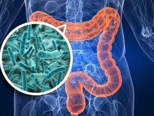 Bệnh tự kỷ có liên quan đến hệ vi sinh vật đường ruột