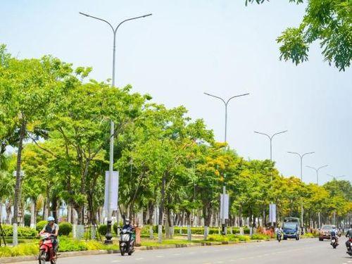 Ngắm hoa sưa nở vàng rực đường phố Đà Nẵng