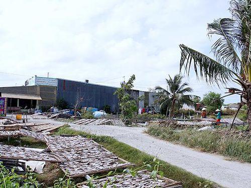 Cần xử lý dứt điểm vụ chiếm dụng đất trái phép ở miền biển Cà Mau