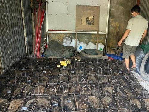 Bắc Giang: Phát hiện xe tải chở 100 con thú quý hiếm