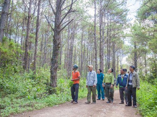 Khởi động hai dự án Quản lý rừng bền vững và bảo tồn đa dạng sinh học
