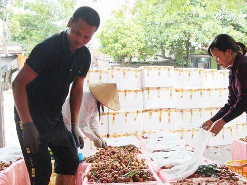 Bắc Giang: 300 cơ sở đóng gói vải thiều đủ điều kiện xuất khẩu sang Trung Quốc