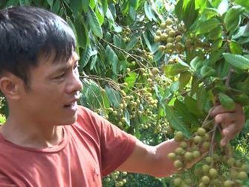 Xây dựng tỉnh Sơn La phát triển xanh, nhanh, bền vững