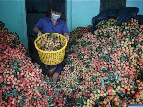 Tạo thuận lợi cho hoạt động xuất khẩu hàng nông sản qua biên giới