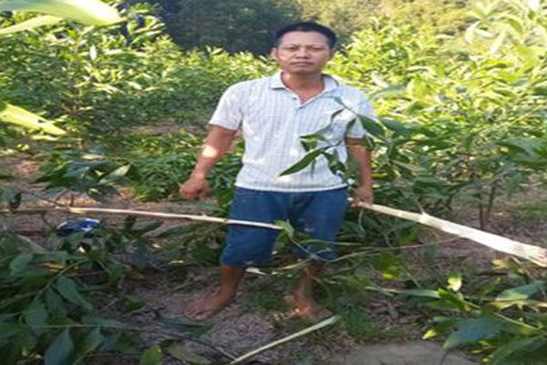 Nghệ An: Tạm giữ đối tượng chặt phá hơn 3.000 gốc keo của người dân
