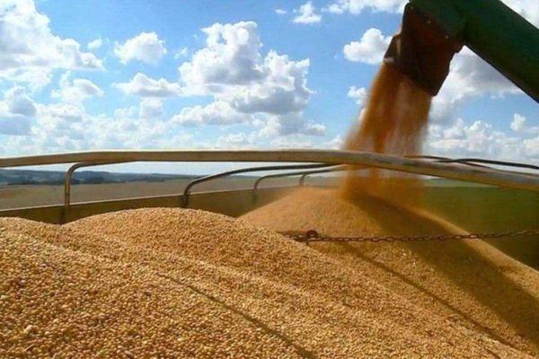 Chiến tranh thương mại Mỹ - Trung leo thang: Trung Quốc tuyên bố ngừng mua nông sản Mỹ!