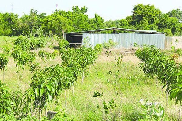 Công an điều tra trồng cây, xây nhà chờ đền bù cao tốc Bắc - Nam