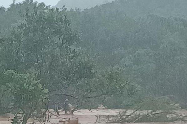 Bình Phước: Cứu 2 người dân mắc kẹt trên cây điều vì lũ lớn