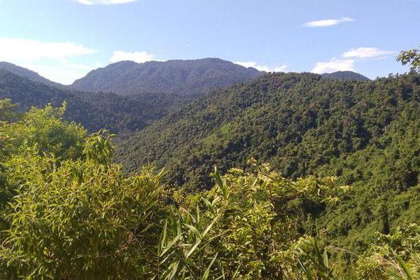 Sau 2 năm bị giao 'nhầm' rừng gỗ lớn, 14 hộ dân vẫn chưa có đất sản xuất