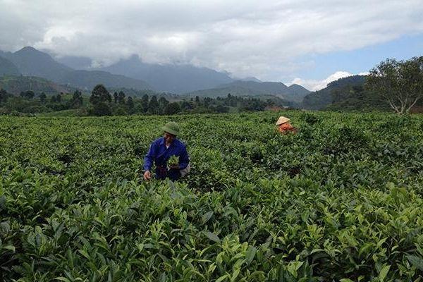 Ðể phát triển kinh tế trang trại bền vững