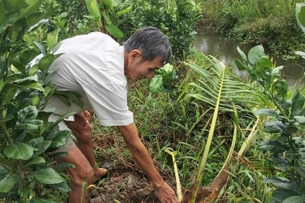 Truy tìm 'con vật lạ' cắn phá vườn dừa khiến nông dân khóc ròng
