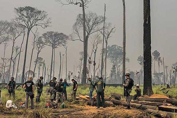 Nỗ lực bảo vệ 'lá phổi' của hành tinh