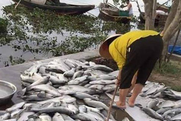 Gần 90 tấn cá vược nuôi lồng bè của người dân bỗng dưng chết nổi trắng trong đêm