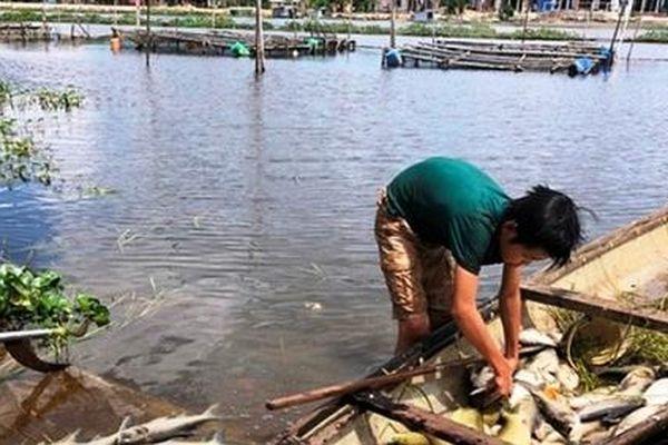 TT- Huế: Cá lồng trên sông Đại Giang chết hàng loạt