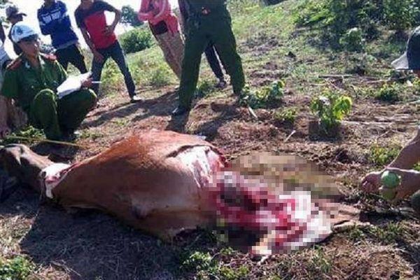 Rủ nhau làm thịt con bò đi lạc, 4 trai làng bị khởi tố