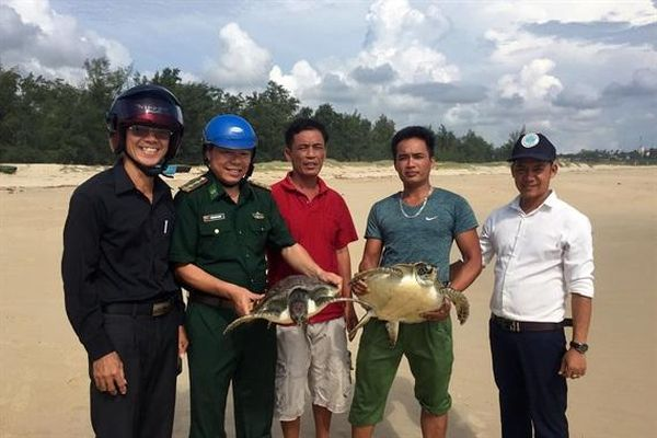 Quảng Trị chi hơn 4,1 tỷ đồng bảo tồn rùa biển