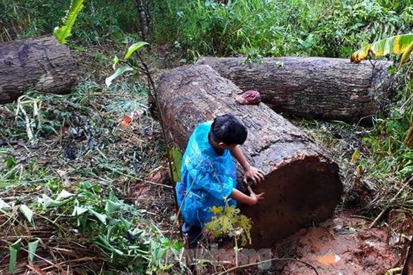 Kon Tum: Lật xe chở gỗ lậu, gỗ đè chết người
